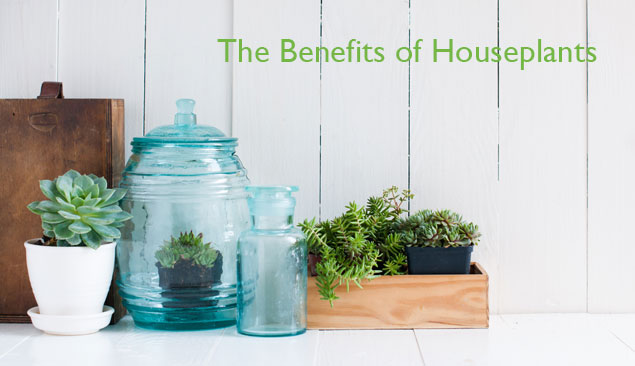 21-The-Benefits-Of-Houseplants
